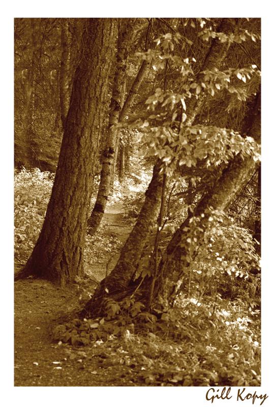 Woodland path.jpg