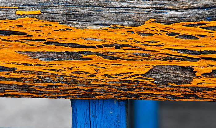 Yellow Wood and the Vertical Blue Wood