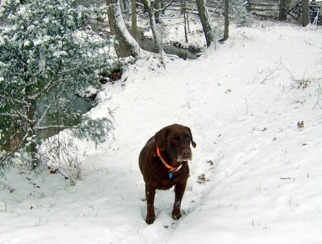 Zach in snow winter 05-06.jpg