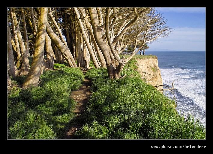 Cypress Trail #1, Davenport, CA