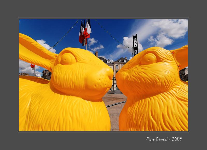 Urban rabbits