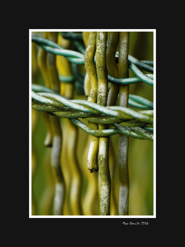 Old wire fence roll 2
