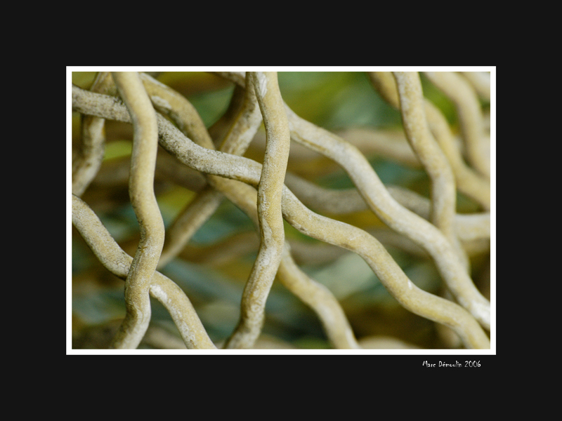 Old wire fence roll 1