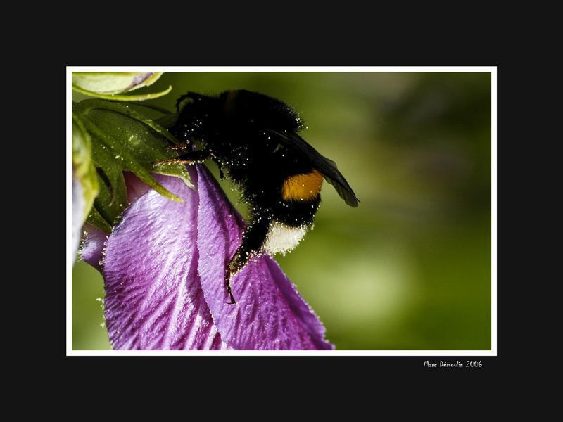 Gathering nectar