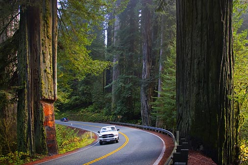 Road in the Redwoods