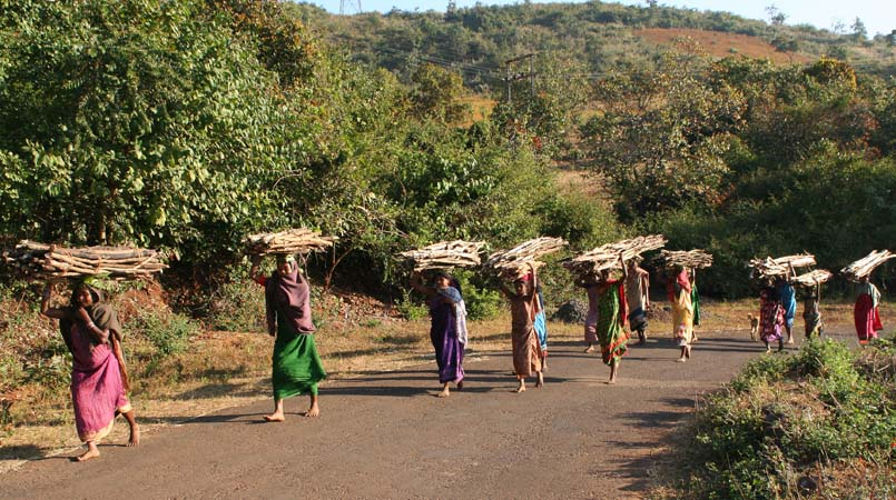 transport of firewood