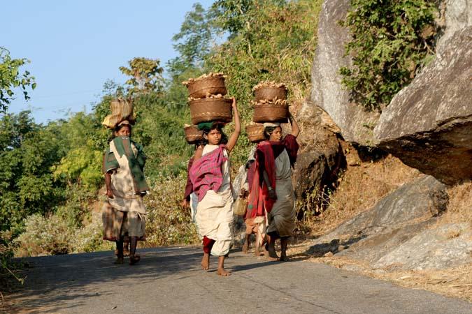 transport of potatoes