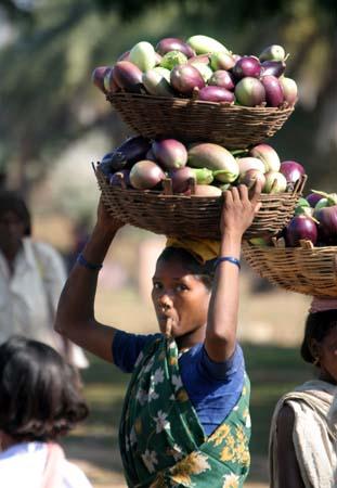 transport of fruit