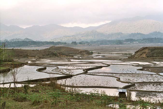 Paddyfields near Ziro