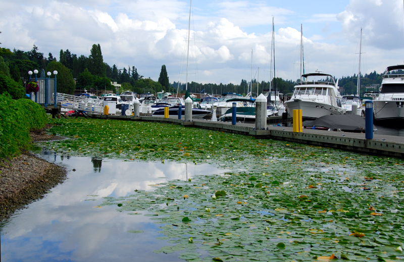 Lake Washington 4