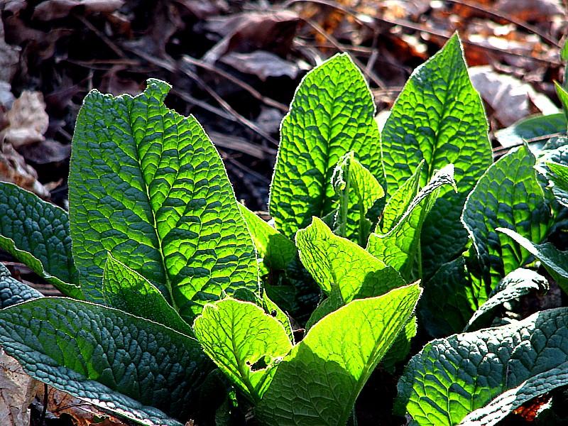 plantes de sous-bois