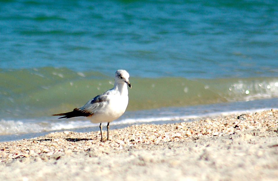 I entrusted a seagull to carry a word to you