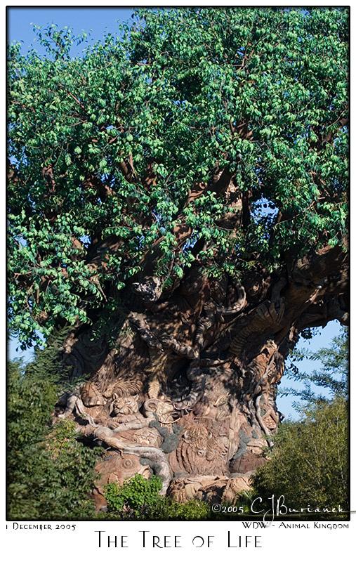 Tree of Life - 7787 05Dec01