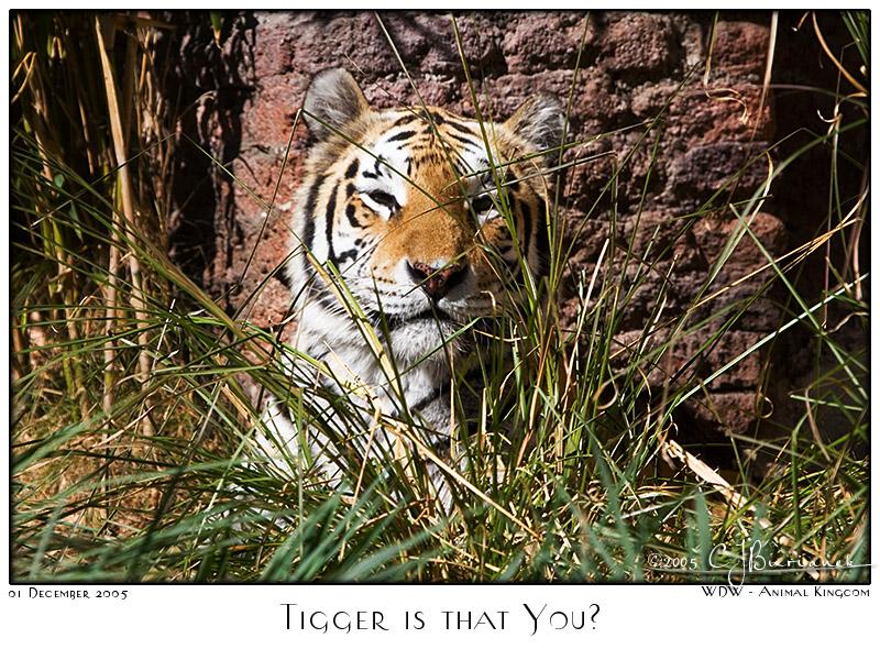 Tigger is that You? - 7887 05Dec01