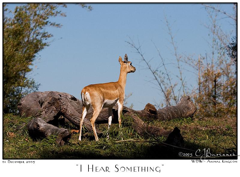 I Hear Something - 7895 05Dec01
