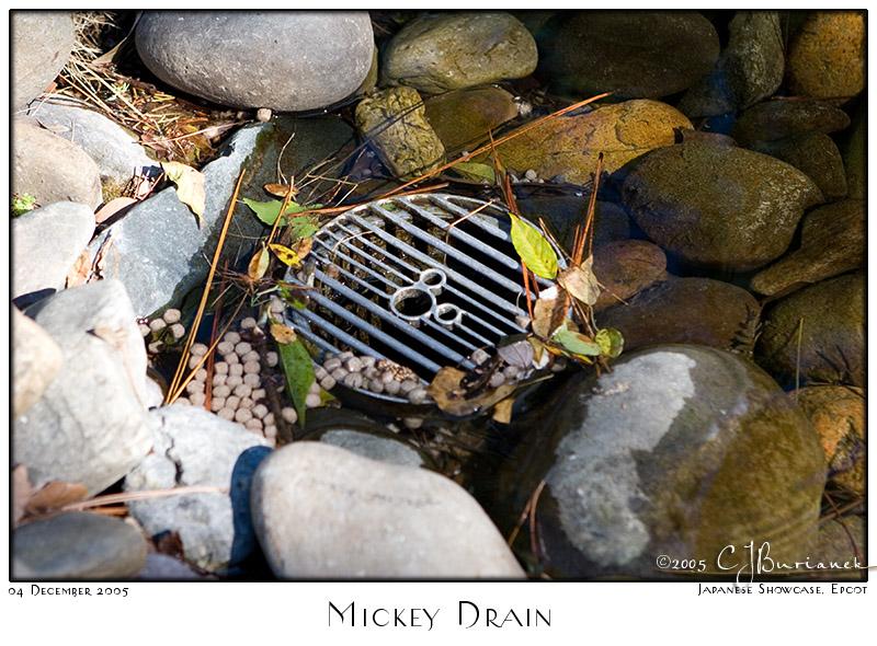 Mickey Drain - 8342 04Dec05