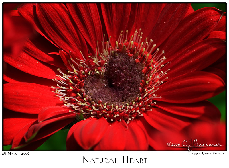 28Mar06 Natural Heart - 10590