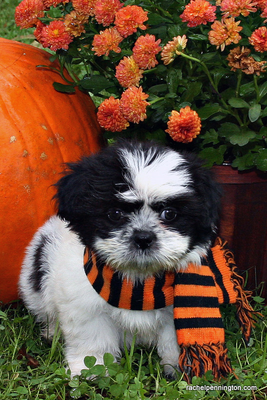 Happy October From Humphrey