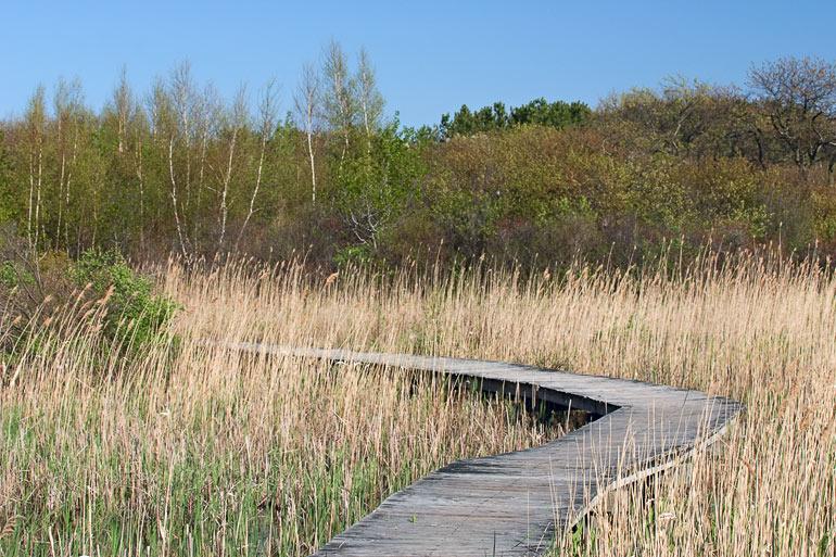Marsh Trail - Parker River NWR