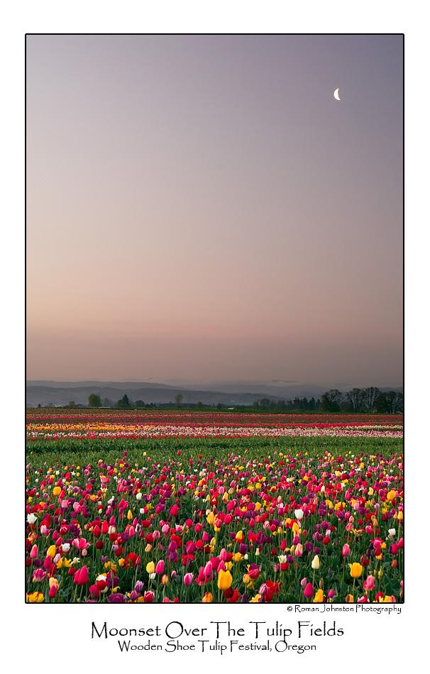 Moonset Ove The Tulip Fields.jpg