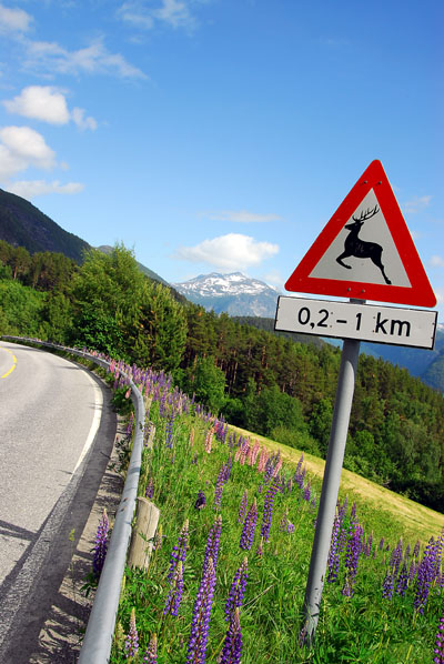 Deer crossing sign, Norway