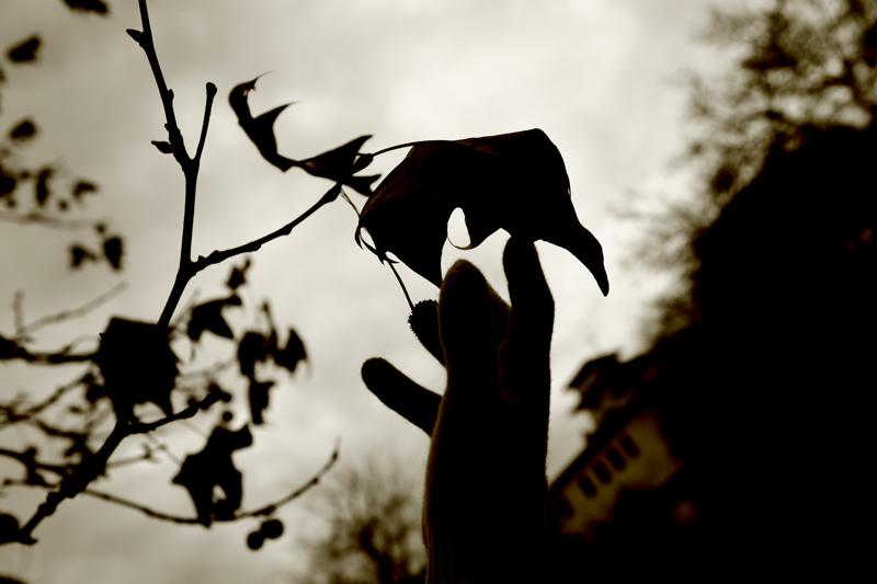 mais les feuilles restaient en silence