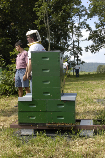 The 2 - Queen Tower Hive