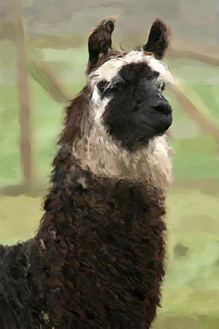 llama flat sharp sb.jpg