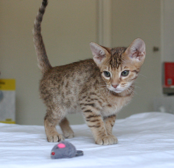 See this mouse?