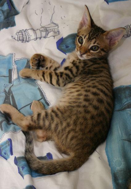 Morritz 9 weeks old
