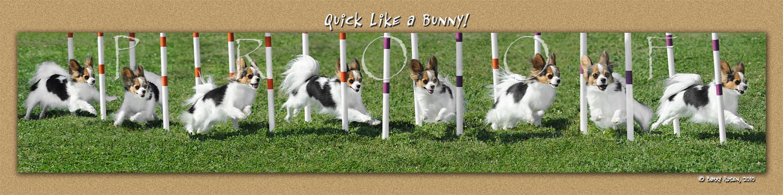Streisand Bunny weave montage