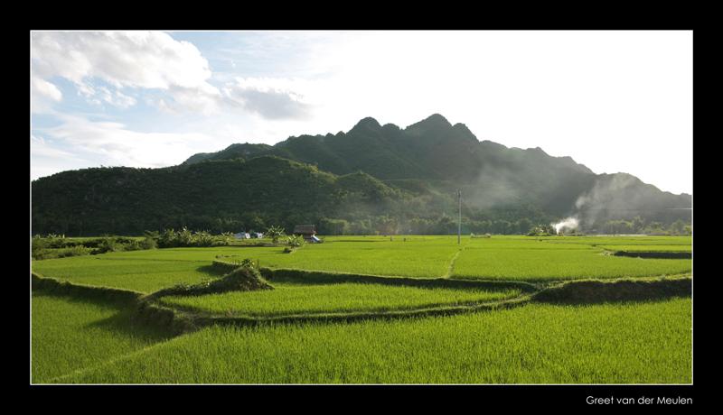 8006 Vietnam rice terraces of Mai Chau