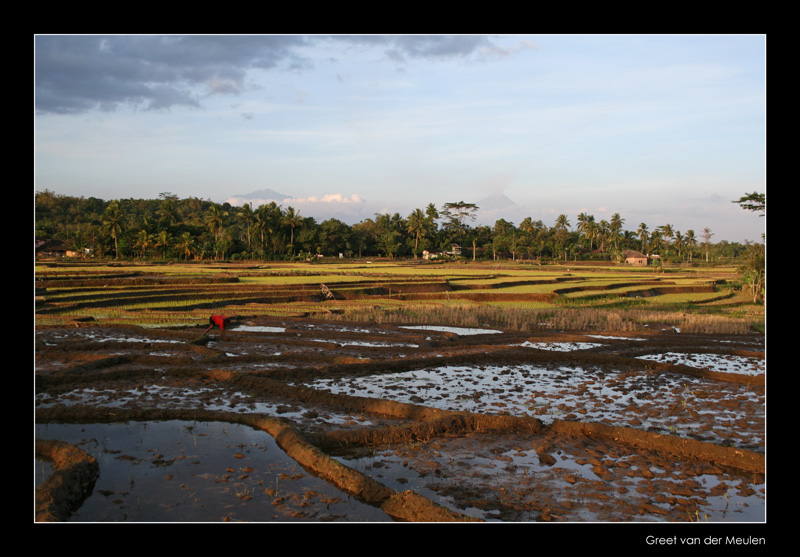 3548 Indonesia, Java ricefields at sunset