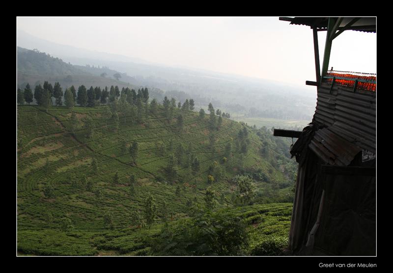 2695 Indonesia, growing tea and coca cola