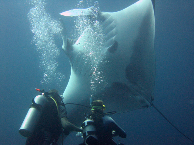 Faire de la plongée a krabi