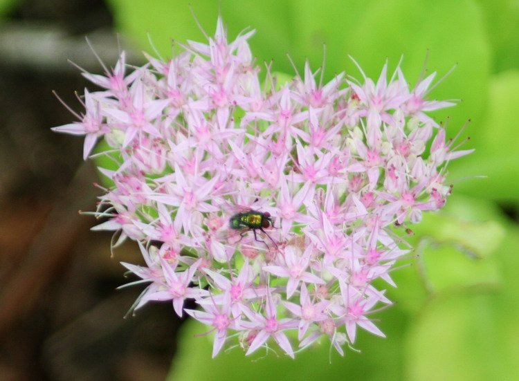 Flowers and Fly / Flores y Mosca