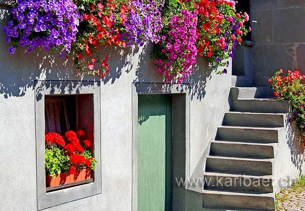 Blumen / Flowers (5656)