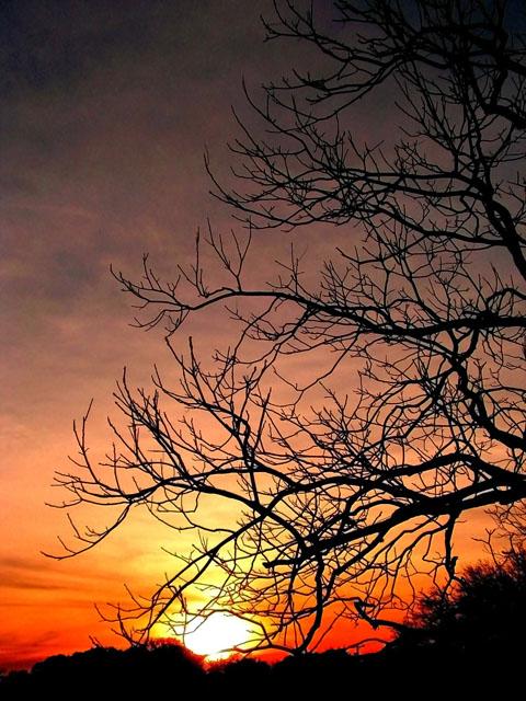 Sunset Through Trees.jpg