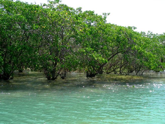 Barra do Qunhaú