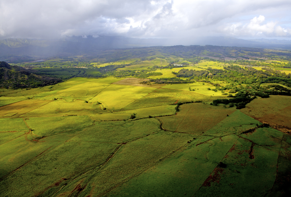 Taro fields, Kauai, HI