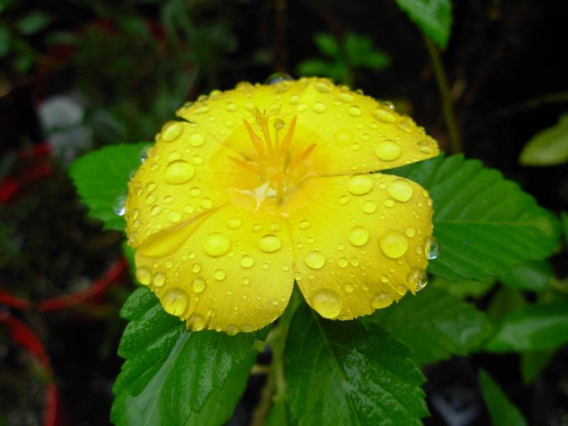 Yellow in the rain