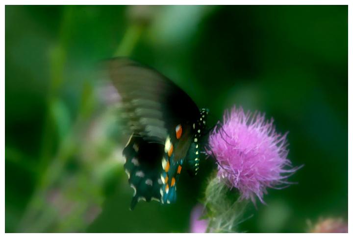 IMG_0735-flutter.jpg