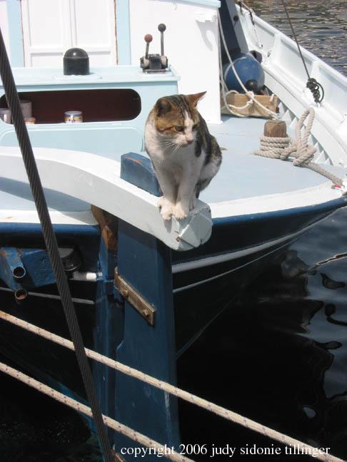 9.18.06 grikos harbor cat