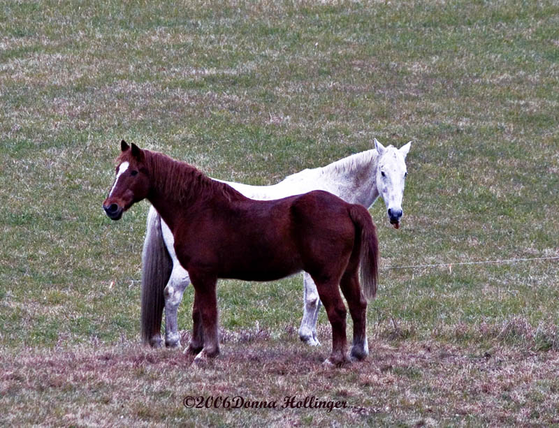 Two horses posing for me!