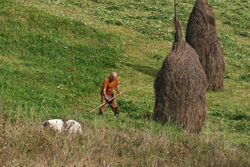 using scythe in Maramures
