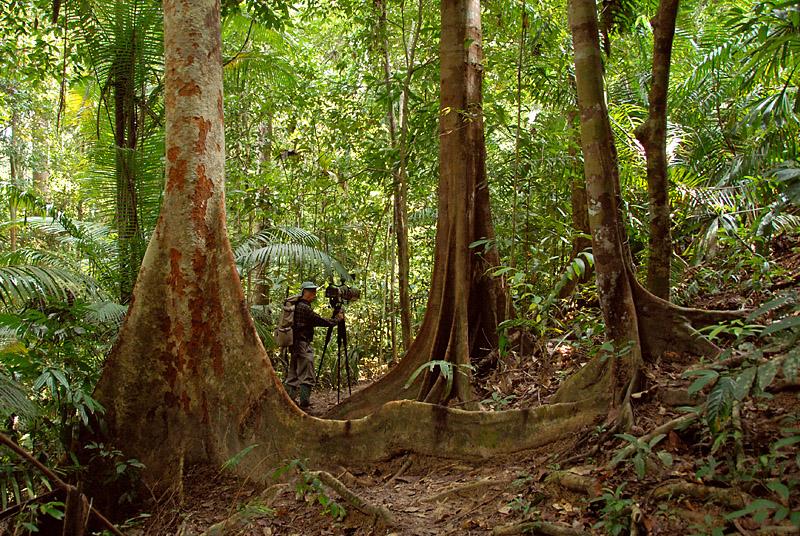 Trails around Kuala Tahan