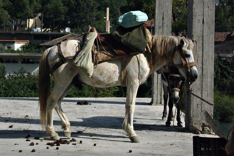 Berati - market day