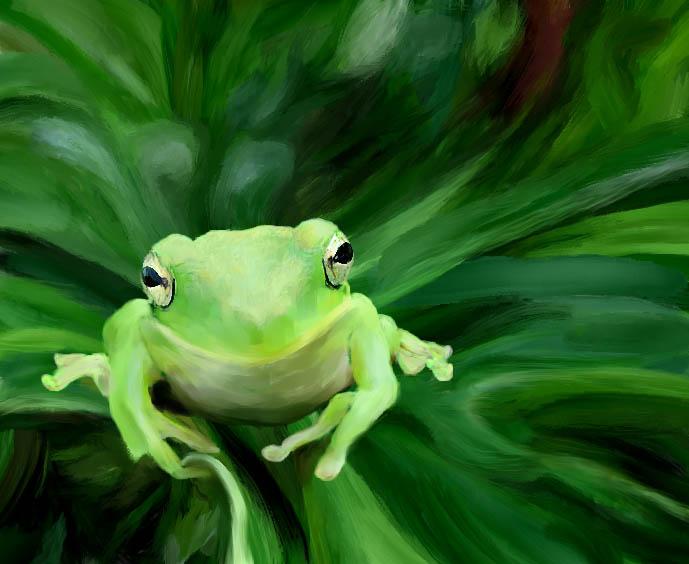tree frog 2.jpg