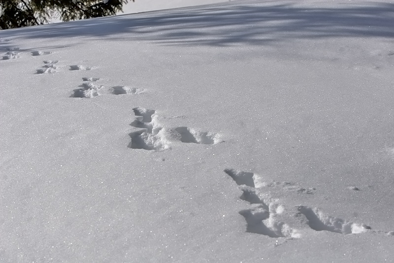 Hare Track