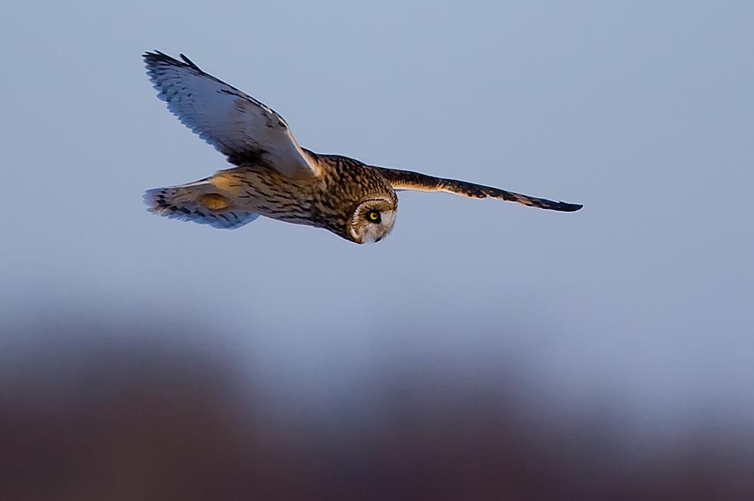 se-owl-flight5.jpg